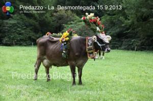 predazzo desmontegada mucche 2013 predazzoblog230 300x199 predazzo desmontegada mucche 2013 predazzoblog230