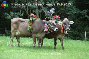 predazzo desmontegada mucche 2013 predazzoblog231 300x199 predazzo desmontegada mucche 2013 predazzoblog231