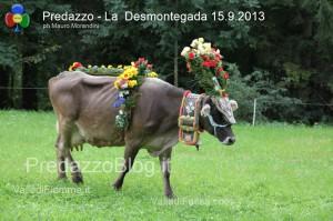 predazzo desmontegada mucche 2013 predazzoblog234 300x199 predazzo desmontegada mucche 2013 predazzoblog234