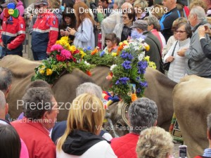 predazzo desmontegada mucche 2013 predazzoblog299 300x225 predazzo desmontegada mucche 2013 predazzoblog299