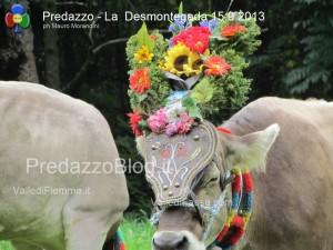 predazzo desmontegada mucche 2013 predazzoblog322 300x225 predazzo desmontegada mucche 2013 predazzoblog322