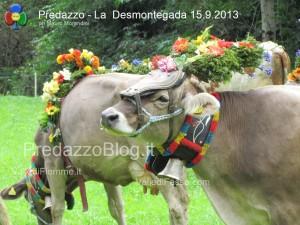 predazzo desmontegada mucche 2013 predazzoblog324 300x225 predazzo desmontegada mucche 2013 predazzoblog324