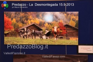 predazzo desmontegada mucche 2013 predazzoblog33 300x199 predazzo desmontegada mucche 2013 predazzoblog33