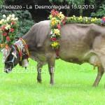 predazzo desmontegada mucche 2013 predazzoblog332 150x150 Predazzo, la fotogallery della Desmontegada 2013