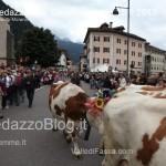 predazzo desmontegada mucche 2013 predazzoblog73 150x150 Predazzo, la fotogallery della Desmontegada 2013