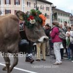 predazzo desmontegada mucche 2013 predazzoblog86 150x150 Predazzo, la fotogallery della Desmontegada 2013