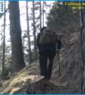 predazzo cercando il boscaiolo delle pepite d'oro