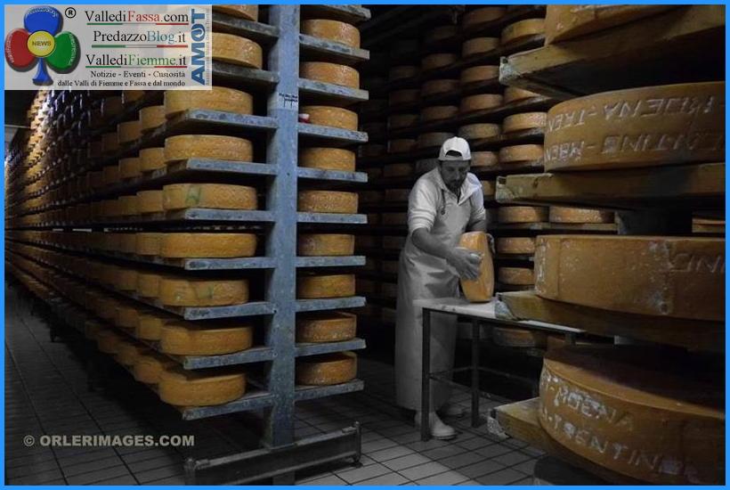puzzone di moena dop predazzo Strada dei formaggi delle Dolomiti in costante crescita