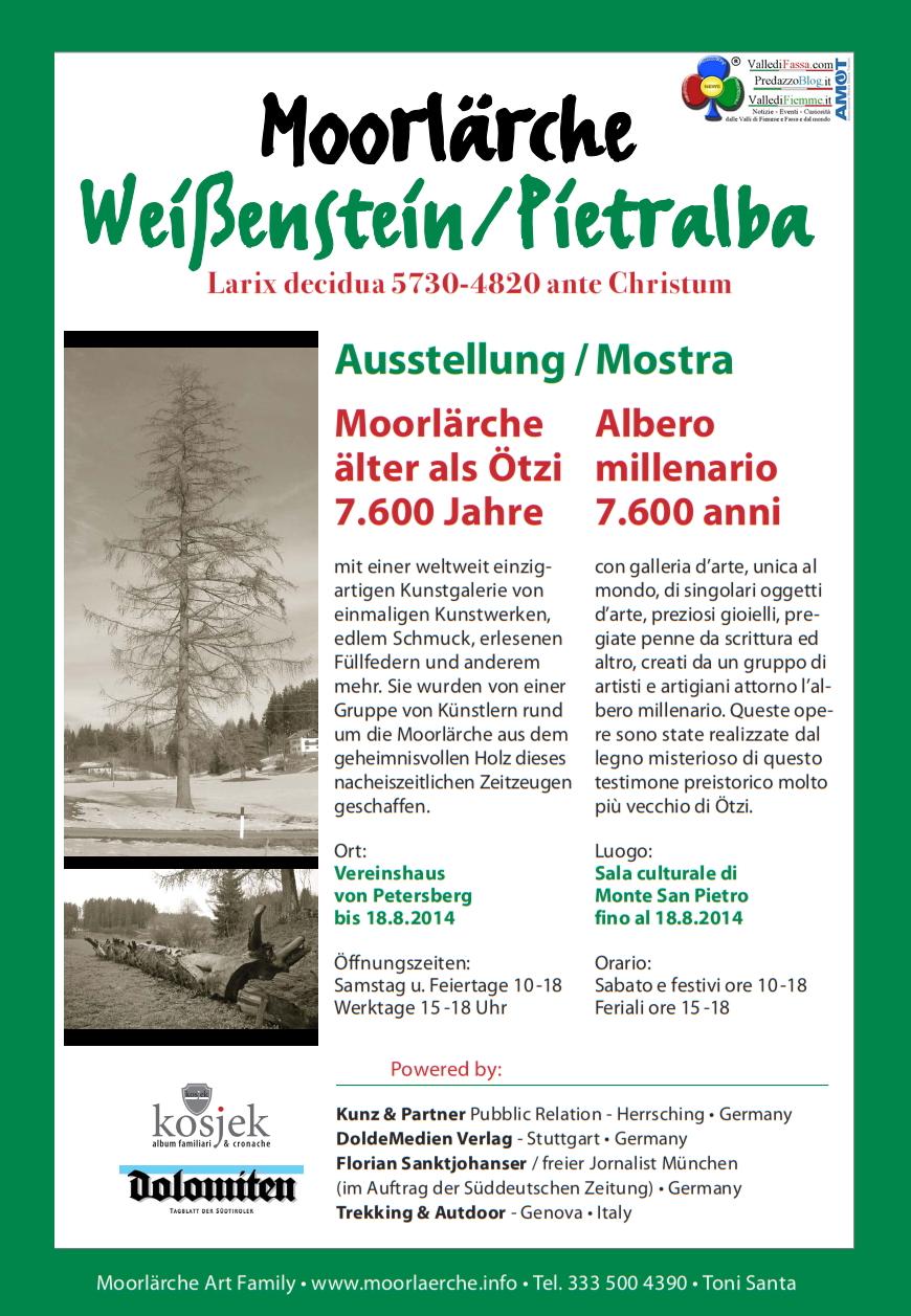 albero millenario monte san pietro Albero millenario di Pietralba in mostra