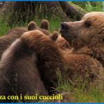 orsa daniza e cuccioli in trentino 150x150 L'orsa Daniza è morta