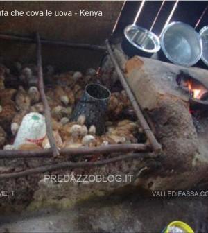 la stufa che cova le uova kenya trento1