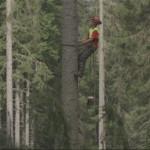 alberi che camminano erri de luca 150x150 Erri De Luca, montagna e spiritualita