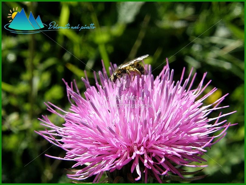fiori montagna 1 Fiemme, la settimana Fiori, erbe e sapori
