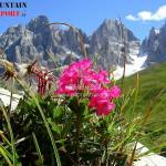 fiori montagna 2 150x150 Predazzo   Bellamonte: Fiori, erbe e sapori   Quel mazzolin di fiori   Il prato nel piatto