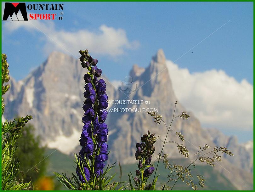 fiori montagna 4 La settimana dei Fiori, erbe e sapori