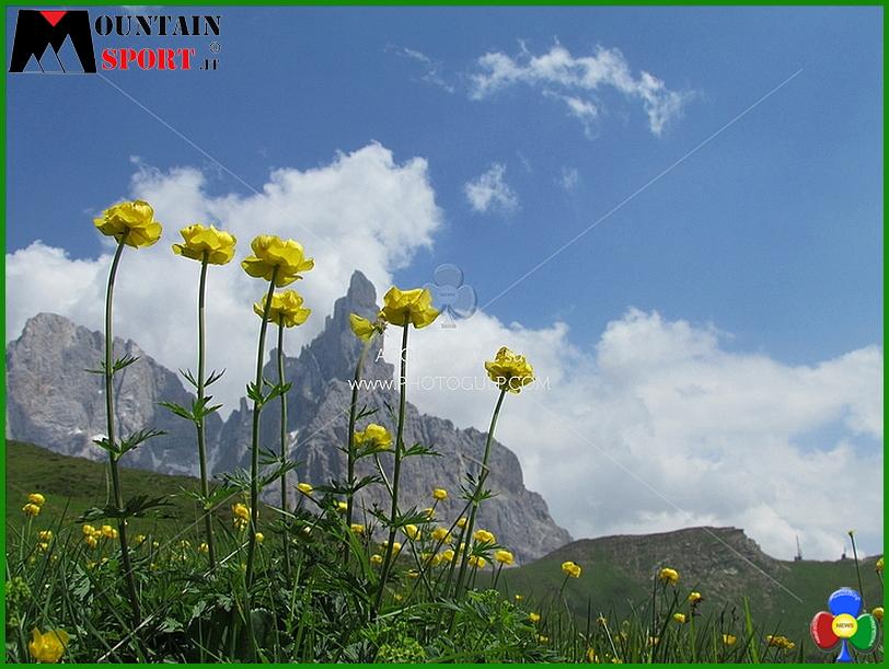 fiori montagna 5 La settimana dei Fiori, erbe e sapori