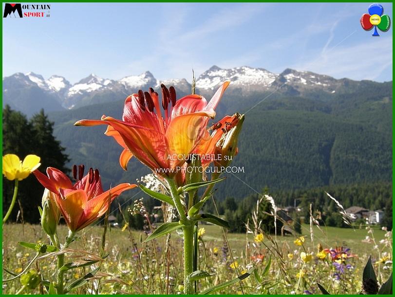 fiori montagna Fiemme, la settimana Fiori, erbe e sapori