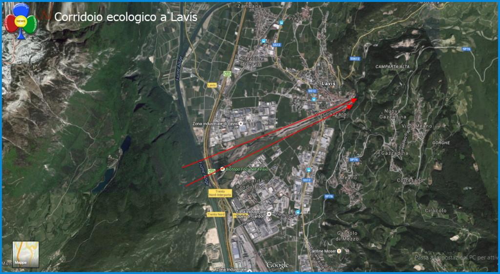 corridoio ecologico a lavis trentino orso1 1024x562 Orso in Trentino, SI o NO? Partecipa al Sondaggio