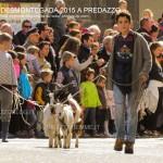predazzo desmontegada 2015 4 ottobre predazzoblog131 150x150 Desmontegada 2015 di Predazzo   Le Foto