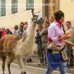 predazzo desmontegada 2015 4 ottobre predazzoblog258 150x150 Desmontegada 2015 di Predazzo   Le Foto