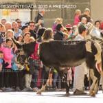predazzo desmontegada 2015 4 ottobre predazzoblog85 150x150 Desmontegada 2015 di Predazzo   Le Foto
