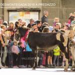 predazzo desmontegada 2015 4 ottobre predazzoblog86 150x150 Desmontegada 2015 di Predazzo   Le Foto