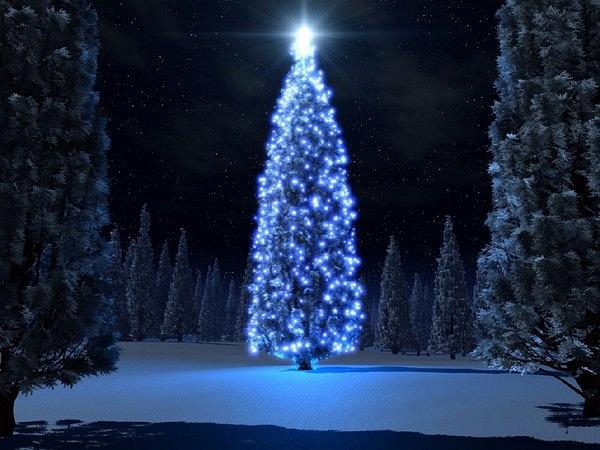 albero di natale L incredibile  albero di Natale realizzato da 500 ragazzi    Video