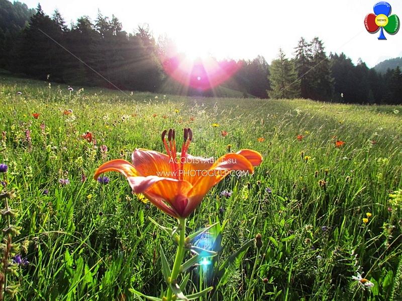 prato fiorito Aria di primavera tra Basta Liquami e Progetto BioGas