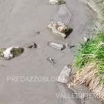 avisio svaso diga di pezze maggio 2016 fiemme5 150x150 NellAvisio muoiono le trote per lo svaso della diga di Pezzè