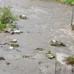 avisio svaso diga di pezze maggio 2016 fiemme9 150x150 NellAvisio muoiono le trote per lo svaso della diga di Pezzè