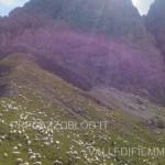 strage di pecore da parte del lupo in val venegia11 150x150 Ancora il Lupo? 4° strage di pecore a forcella Venegia