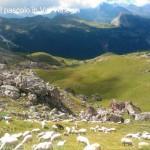 strage di pecore da parte del lupo in val venegia51 150x150 Ancora il Lupo? 4° strage di pecore a forcella Venegia