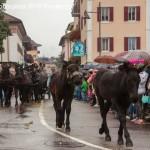 desmontegada 2016 predazzo151 150x150 La pioggia non ferma la Desmontegada di Predazzo   Le foto