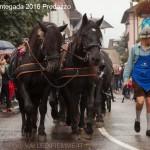 desmontegada 2016 predazzo153 150x150 La pioggia non ferma la Desmontegada di Predazzo   Le foto