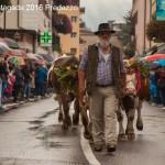 desmontegada 2016 predazzo32 150x150 La pioggia non ferma la Desmontegada di Predazzo   Le foto