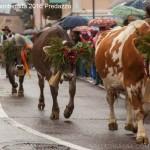 desmontegada 2016 predazzo35 150x150 La pioggia non ferma la Desmontegada di Predazzo   Le foto