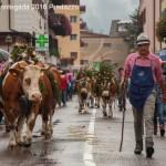 desmontegada 2016 predazzo48 150x150 La pioggia non ferma la Desmontegada di Predazzo   Le foto