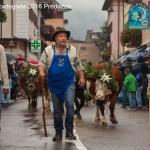 desmontegada 2016 predazzo85 150x150 La pioggia non ferma la Desmontegada di Predazzo   Le foto