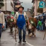desmontegada 2016 predazzo86 150x150 La pioggia non ferma la Desmontegada di Predazzo   Le foto