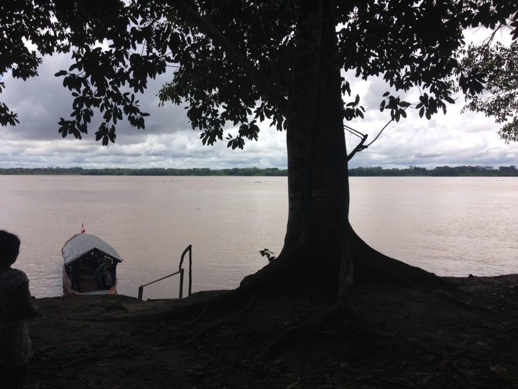 """d54491eb bf8e 4498 b2fa cae81d520c4b 1024x768 Valeria Tomasi in Amazzonia, custode della biodiversità"""""""