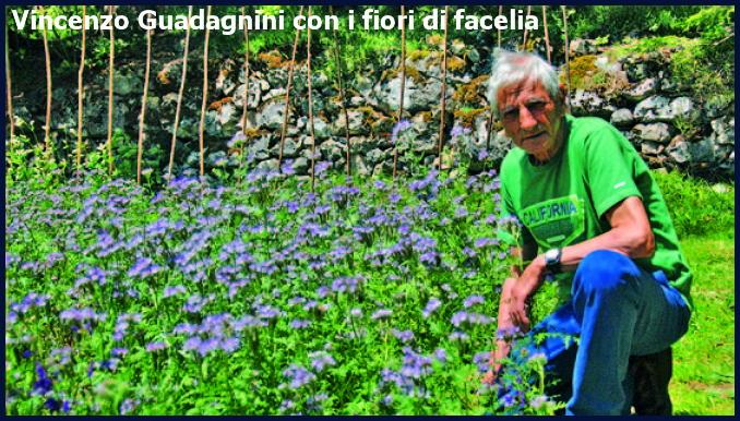 vincenzo guadagnini facelia Nuovi progetti per salvare le api e i fiori in Valle di Fiemme