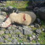 strage di pecore al passo fedaia 150x150 Buongiorno, salve, ciao, i lubrificanti esistenziali che fanno bene