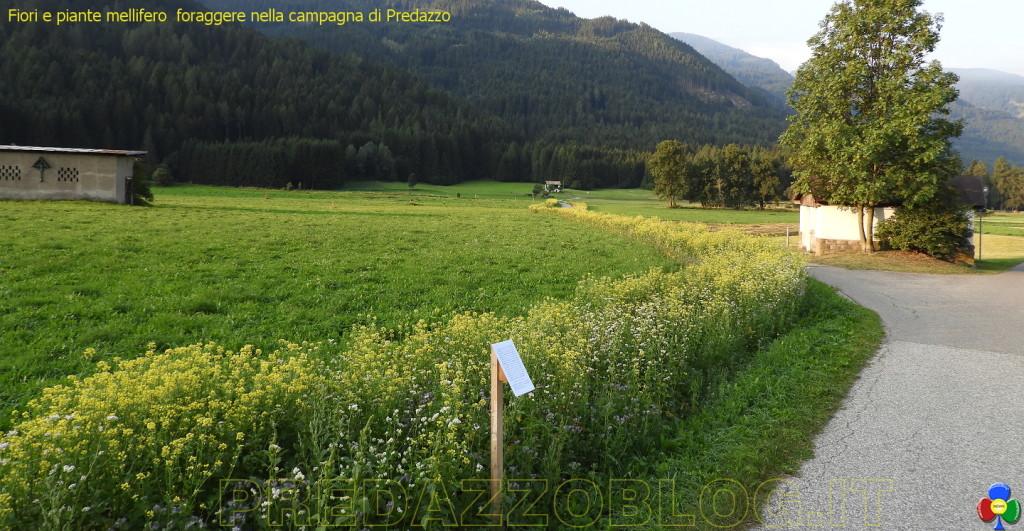 fiori e piante nella campagna di predazzo 1024x531 La cornice fiorita nella campagna di Predazzo