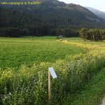 fiori e piante nella campagna di predazzo 150x150 Aria di primavera tra Basta Liquami e Progetto BioGas