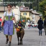 c desmontegada predazzo 2017 ph lorenzo delugani12 150x150 Desmontegada 2017 Predazzo   Le foto della sfilata