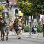 c desmontegada predazzo 2017 ph lorenzo delugani6 150x150 Desmontegada 2017 Predazzo   Le foto della sfilata