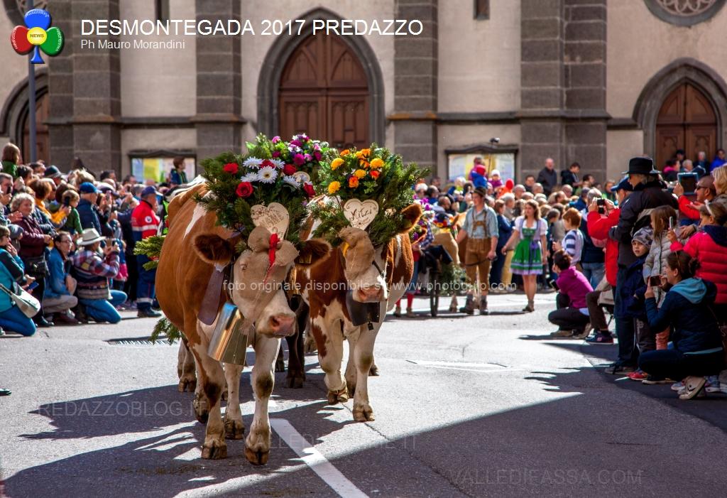 desmontegada 2017 predazzo by mauro morandini16 Predazzo: Tutto il colore di una Desmontegada de le Vache in sicurezza