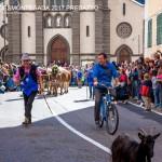 desmontegada 2017 predazzo by mauro morandini31 150x150 Desmontegada 2017 Predazzo   Le foto della sfilata