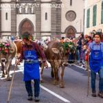 desmontegada 2017 predazzo by mauro morandini34 150x150 Desmontegada 2017 Predazzo   Le foto della sfilata