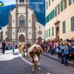 desmontegada 2017 predazzo by mauro morandini47 150x150 Desmontegada 2017 Predazzo   Le foto della sfilata